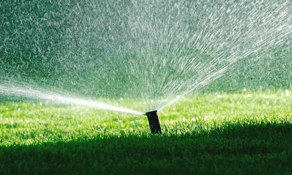 Kiedy najlepiej nawilżać trawnik?