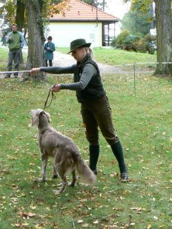 Výcvik lovesckého psa