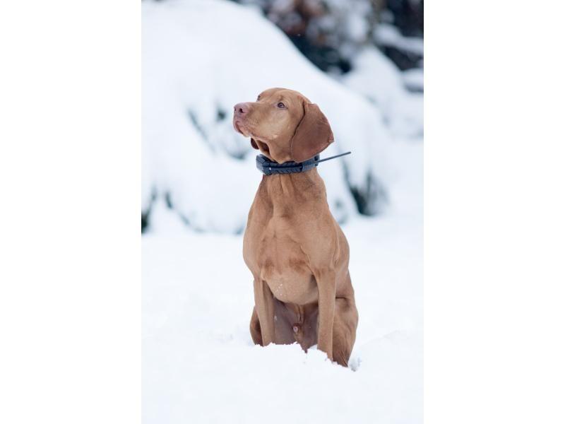 RF anténa - DOG GPS pre obojok Dogtrace